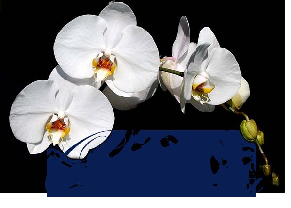Ristorante orchidea for Nuovo stelo orchidea